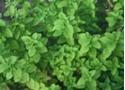 Imagen de Mejorana ecologica (3 kg.)