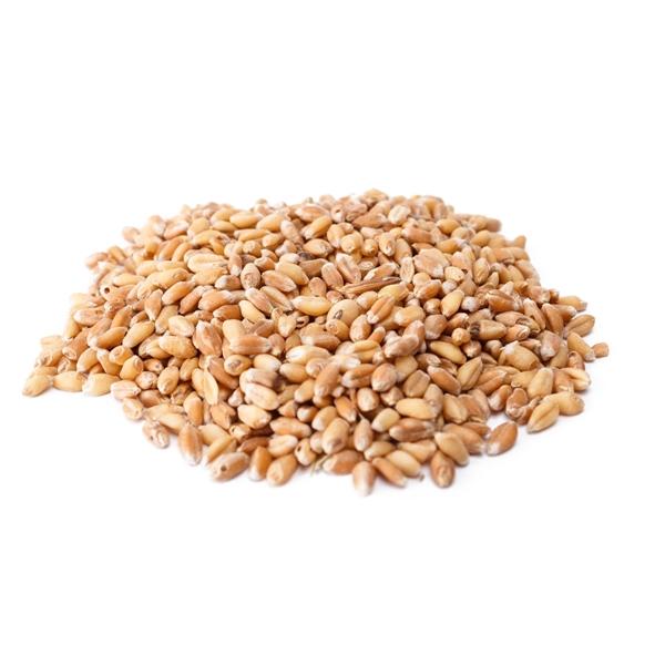 Picture of Trigo en grano eco 25kg