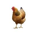 Imagen para la categoría COMIDA PARA ANIMALES